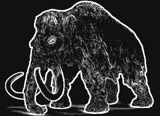 ząb mamuta /01